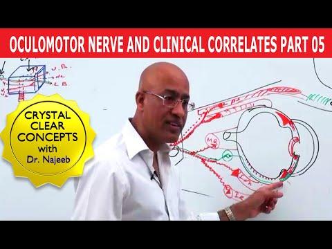 Oculomotor Nerve and Clinical Correlates Part 5