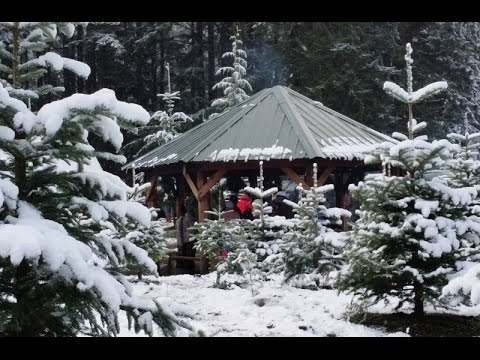 Bigfoot And The Christmas Tree Farm of Mossyrock Washington