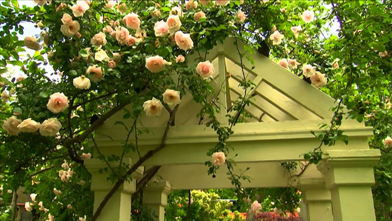 How To Maintain Rose Bushes P Allen Smith Classics