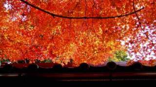Amazing autumn leaves in Kyoto.