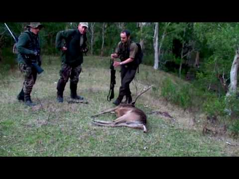 Hunting Rusa deer in New Caledonia part 47(Roaring stags)