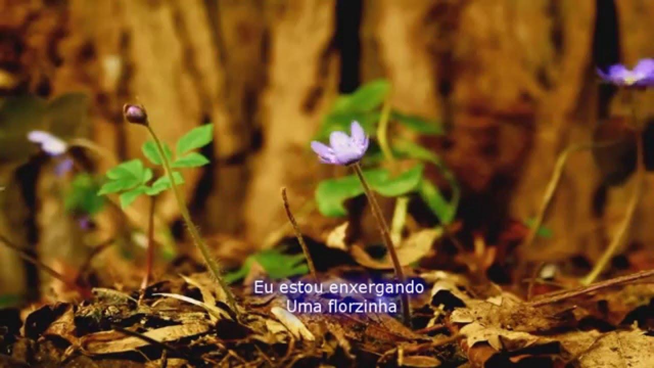 Flor Do Deserto Madrinha Sophie Céu Do Arco Iris Youtube