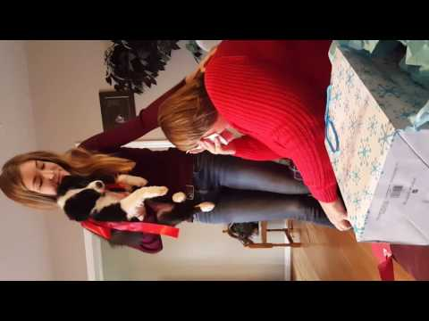 Most EMOTIONAL Christmas Puppy Surprise Ever
