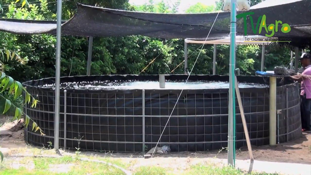 Implementaci n del sistema biofloc en acuicultura tvagro for Criadero de cachamas en tanques
