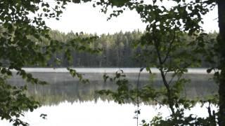 Музыка утреннего леса. Автор фильма - Александр Травин