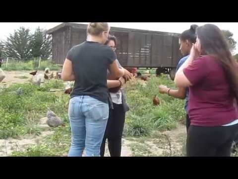 video:Chicken Catch