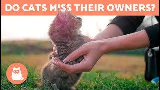 Do CATS MISS Their OWNERS?  Do They Forget Us?
