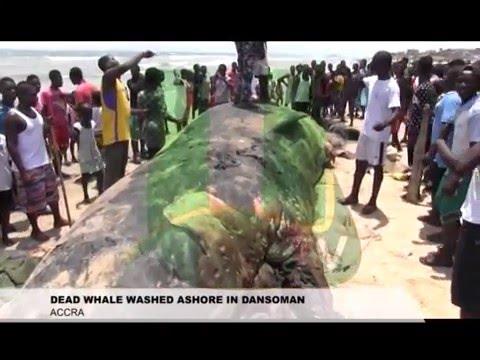 Dead Whale Washed Ashore At Dansoman Beach
