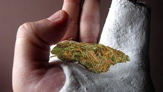 Cannabis Helps Heal Broken Bones: Study