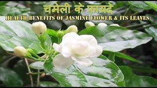 चमेली के फ़ायदे | Health & Beauty Benefits of Jasmine Flower |  चमेली के स्वास्थय लाभ