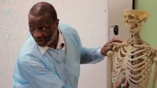 Урок «Медицина, хирургия, анатомия, сердце» Jhon Heart Lesson 3
