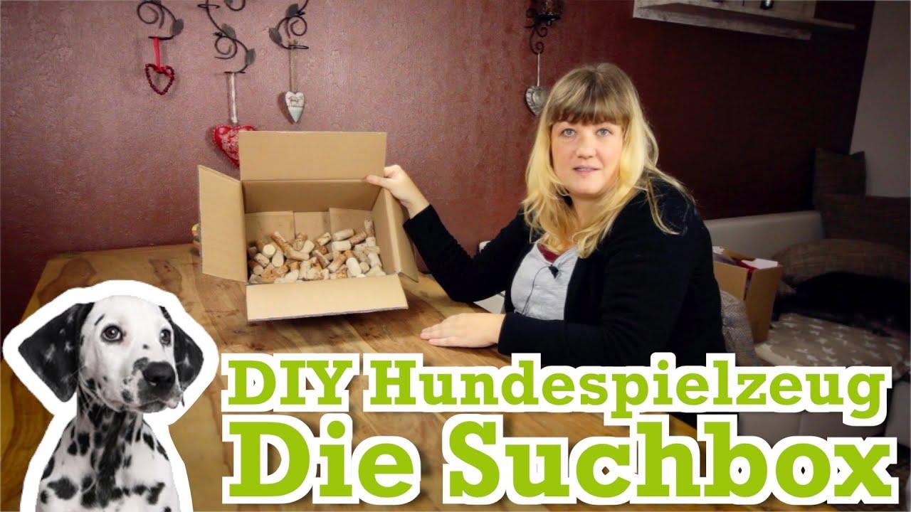 diy hundespielzeug kostenlos selber machen 1 die suchbox. Black Bedroom Furniture Sets. Home Design Ideas