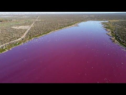 شاهد: بحيرة في منطقة باتاغونيا الأرجنتينية تتحول إلى اللون الوردي بسبب التلوث…  - نشر قبل 19 ساعة