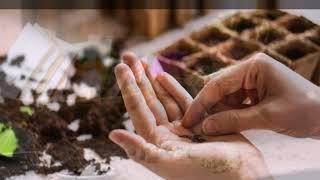 Как Подготовить почву к посеву семян?