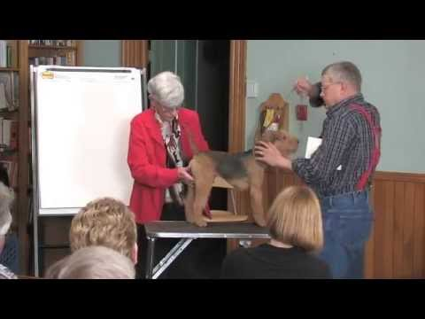 A Discussion of the Lakeland Terrier Part 4