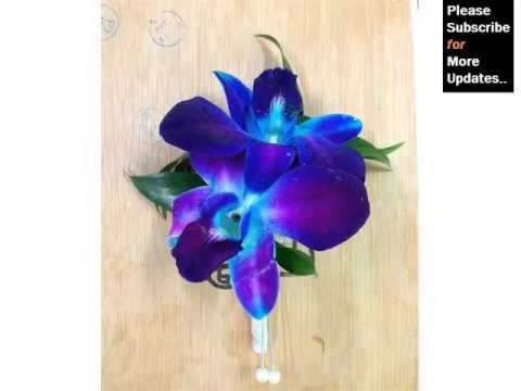 Blue Dendrobium Orchids Orchid Breed Identification By Picture