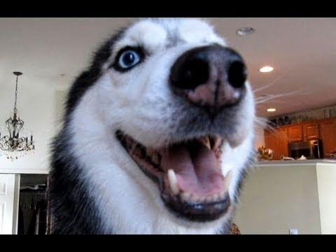 """Mishka says """"Supercalifragilisticexpialidocious""""!"""