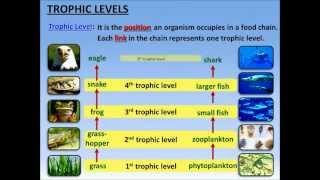 Food Chains, Trophic Levels and Ecological Pyramids - PowerPoint - Tangstar Science
