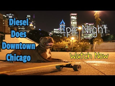 Epic Night Downtown With D - Super Trained Dog-  Watch Now