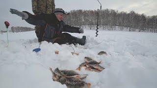 ПОЛОСАТЫЙ ПРЕТ только у меня ЛУЧШАЯ ОСНАСТКА на ОКУНЯ в глухозимье Зимняя рыбалка 2020