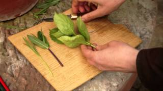 How to take softwood or soft tip cuttings