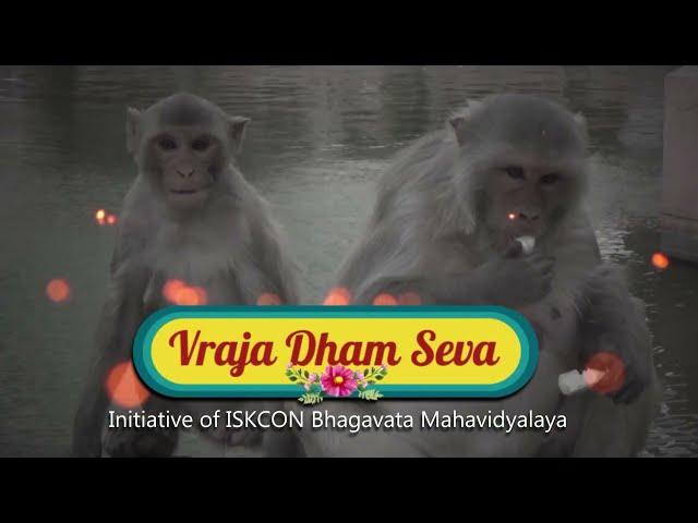 18 06 2021Vraja Dham Seva | Gau Seva at Govardhan | 18.06.2021