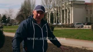 видео как правильно сажать газонную траву