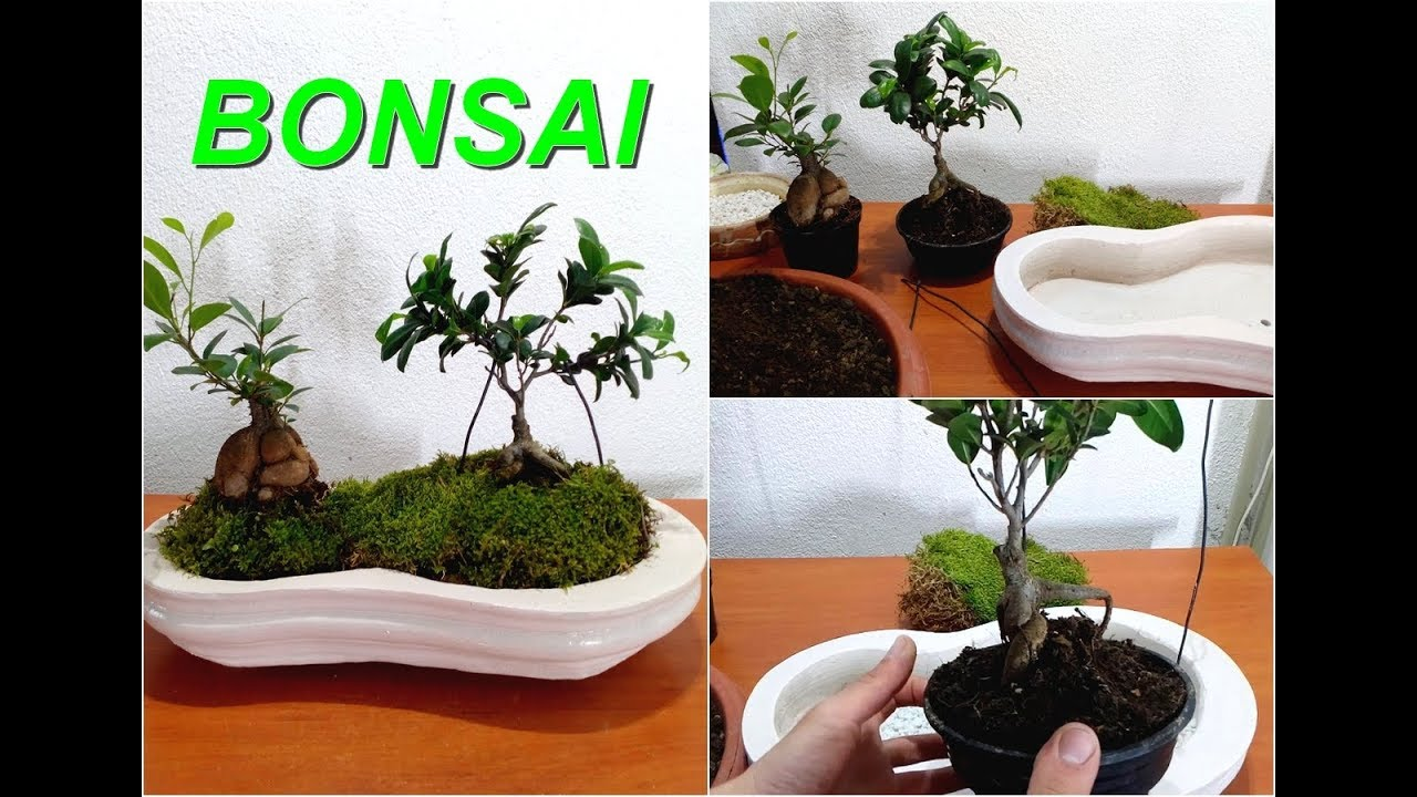 How To Repotting Your Bonsai Tree Youtube