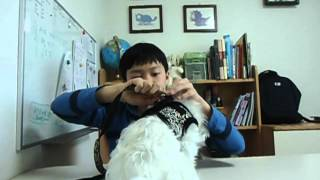 Puppia Review 02 - Black Harness (Lim Min Woo) Thumbnail