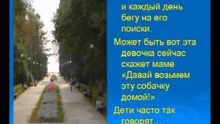 Иванова Людмила - Зеленогорск глазами бездомной собаки - презентация