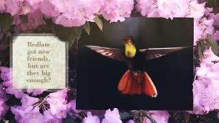 Thistledown - Midsummer Bedlam trailer