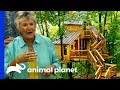 A Breathtaking Birdhouse Treehouse For Making The Most Of Retirement | Treehouse Masters