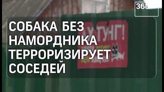 В поселке Сергиево-Посадского района пес нападает на жителей