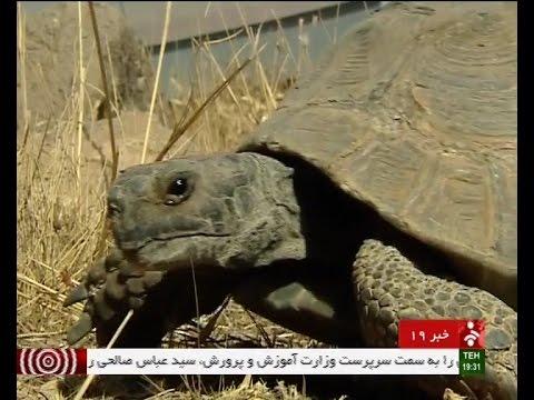Iran Wild animals treatment, Khojir natural protected area مداواي حيوانات منطقه حفاظت شده خجير ايران