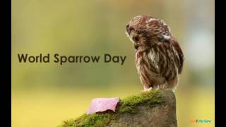 World Sparrow Day - 20th March - Save Sparrow
