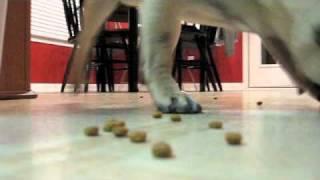 Pug Vacuum Cleaner