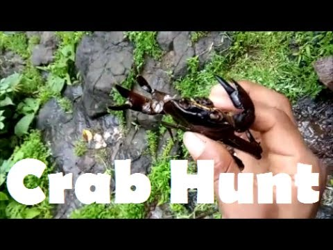 Crab Catching | Crab Hunt in Konkan | Crab Hunting in Indian Village