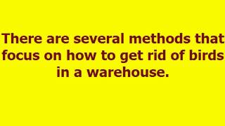 How To CONTROL [BIRDS] In The WAREHOUSES