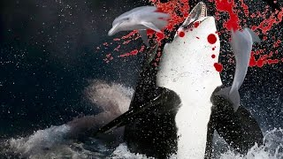 Killer whale earns its name while chasing a gigantic dolphin pod