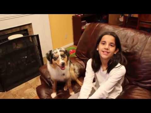 Pearl the mini American Shepherd Trick video #2