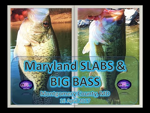 SLAB Crappie And Big Bass, Maryland Reservoir, 16 April 2017