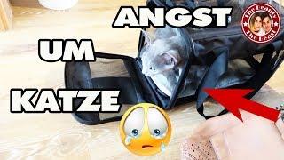ANGST UM NALA !! KATZE MUSS ZUM ARZT ! | daily VLOG TBATB