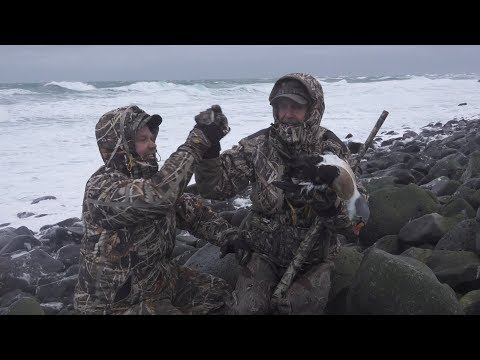 King Eiders In The Harsh Environment Of Alaska's St. Paul Island — Browning Films Episode 5