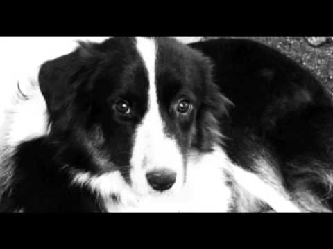 Western Border Collie Rescue - Oklahoma Dogs