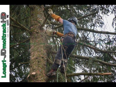 Métier EXTREME : Abattage par démontage d'arbres délicats   Rev'Elagage