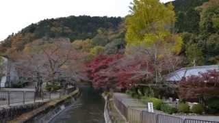 京都市山科区 琵琶湖疏水(一燈園周辺)
