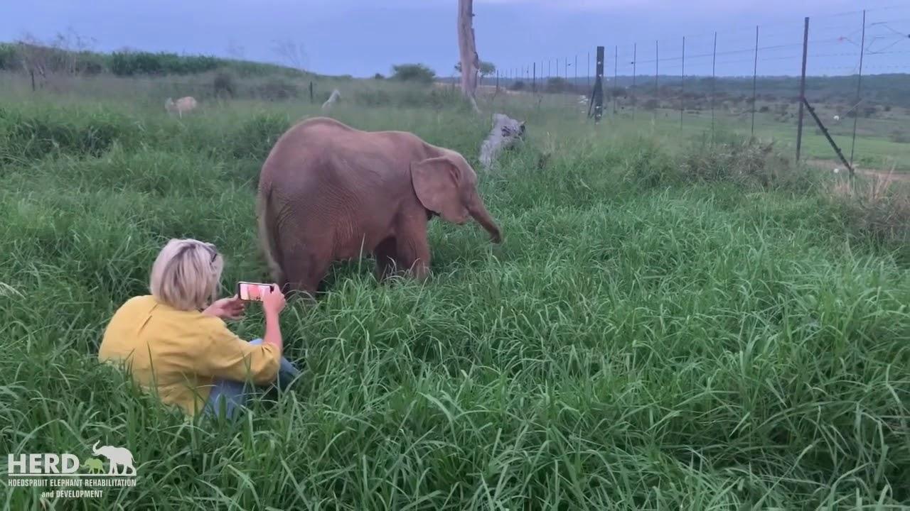 Altogether: baby elephant Khanyisa, Lammie & Adine at the nursery 🐘💖🐑