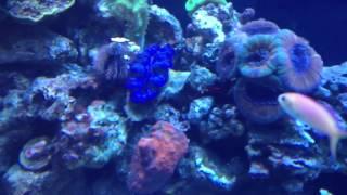 Triad Reefcritters 300 DD Reef thumbnail