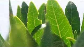 Korsika flora(makro video flora korsika., 2008-07-24T20:21:00.000Z)
