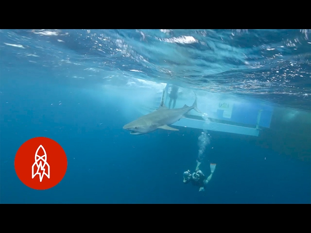 The Shark Trackers: Catching Up with Great Whites